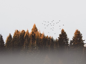 Plano de Gerenciamento de Riscos Ambientais – PGRA / PGR. Floresta.