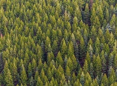 O Relatório Ambiental Simplificado (RAS) é solicitado a empreendimentos ou atividades com menor potencial de degradação na natureza; atestando sua viabilidade ambiental.