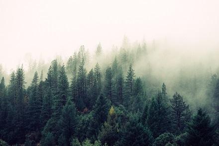 Floresta. O Plano de Emergência Ambiental levanta cenários emergenciais capazes de desencadear incidentes perigosos ou prejudiciais, e a proposição de ações para mitigar o incidente.
